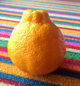 Justin's fruit