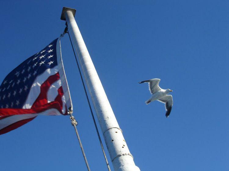 flag-seagull