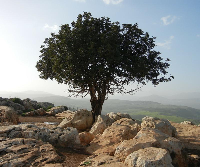 tree-189158_1920