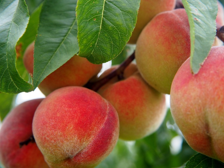 peach-2632182_1920