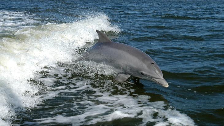 dolphin-1167996_1920