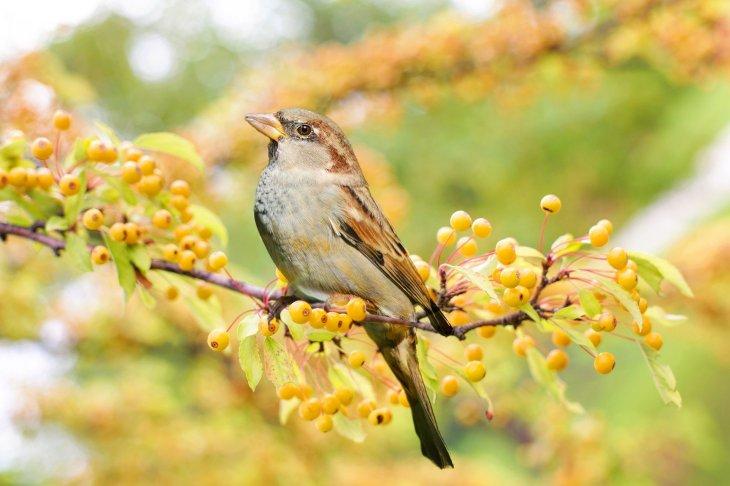 bird-2847799_1920